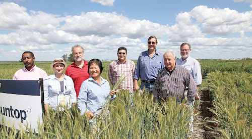 World wheat leaders in Narrabri