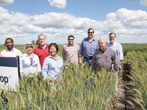 World wheat leaders in Narrabri