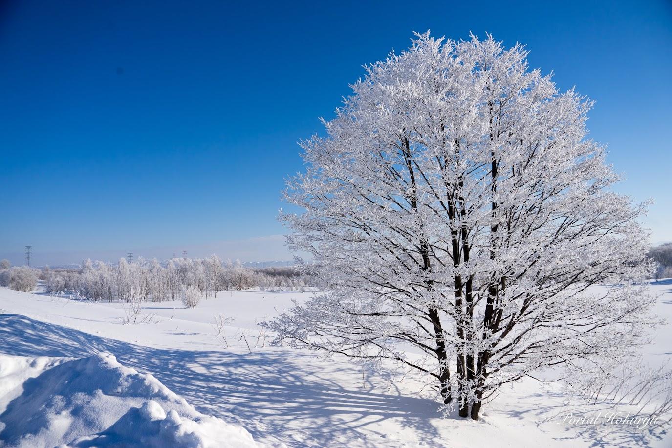 樹氷の煌めき