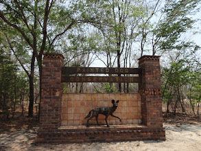 Photo: The Painted Dog Conservation