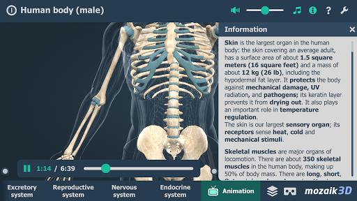 Human body (male) educational VR 3D 1.19 screenshots 6