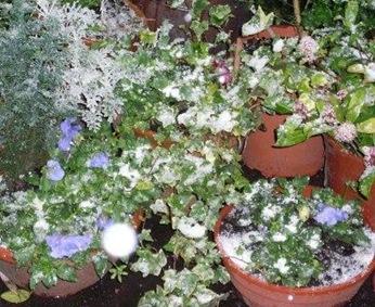 plantes neige