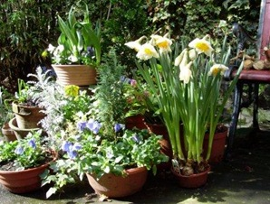 fleurs terrasse soleil