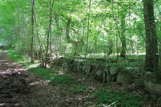 Photo: Stengærde. Slagslunde Skov, Indelukket