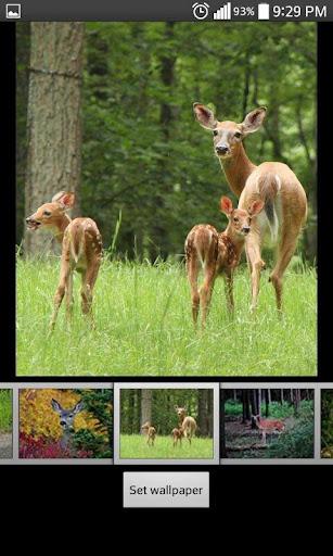 Deer  HD Wallpapers 1.2 screenshots 2
