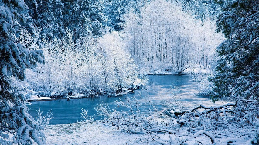 android Winter forest.Nature wallpaper Screenshot 3