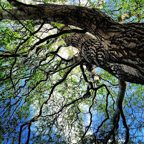 Corkscrew Willow Tree by Katie Schmitt - Nature Up Close Trees & Bushes ( , Spring, springtime, outdoors )