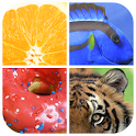 Guess The Word : Close Up Picture icon