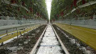 El agro almeriense afronta distintos retos que se debatirán el próximo 1 de junio en la provincia de Almería.