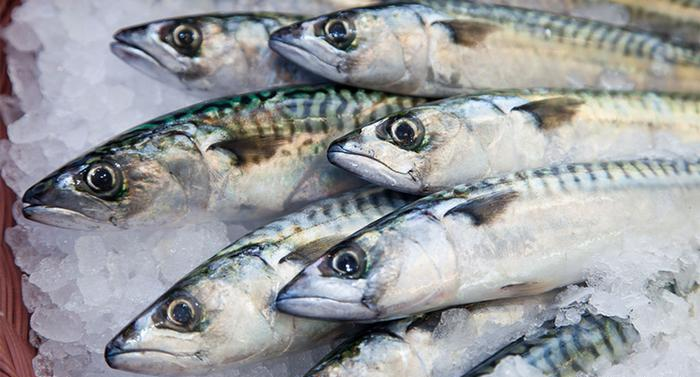Top 10 Fish With The Highest Amounts of Mercury
