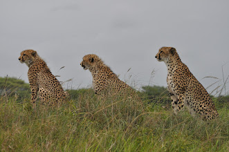 Photo: Phinda Game Reserve, South Africa