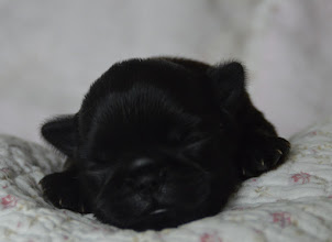 Photo: Female 9 days old