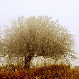 Tree in fog by Gaylord Mink - Nature Up Close Trees & Bushes ( nature, plants, tree, fog )