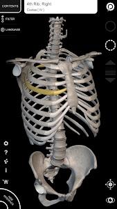 Muscular System - 3D Anatomy v1.1.1