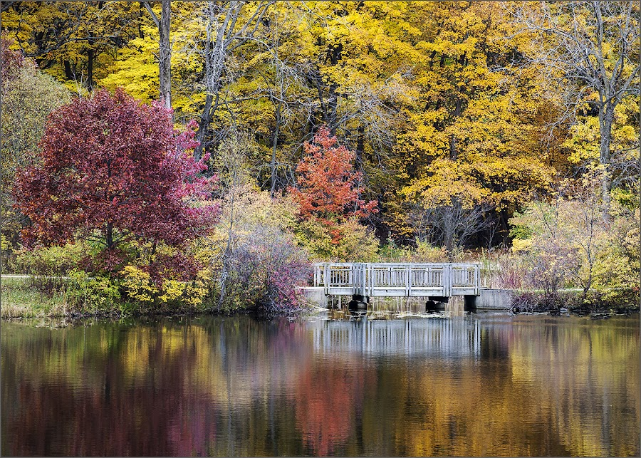 Woodland Trail by Jon Kinney - Landscapes Forests ( water, fall, reflections, woods )
