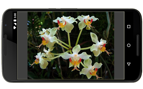 Orchideje v Indonésii - náhled