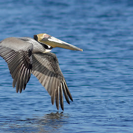 by Luc Raymond - Animals Birds (  )