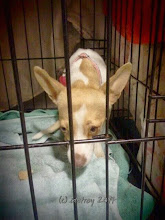 Photo: On very frightened small dog arrived. I am grateful others have rescued her.