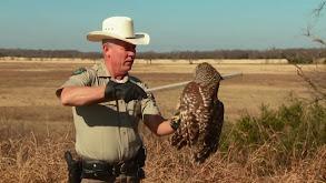 Owl Gone Bad thumbnail