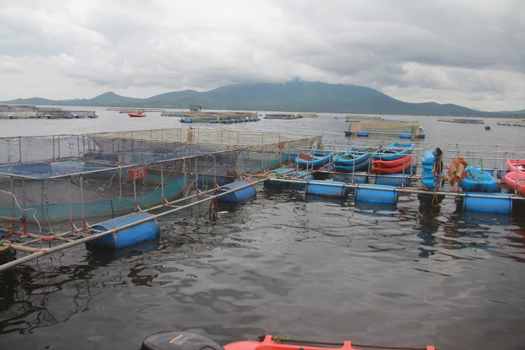 Some of the fish cages in Lake Victoria owned by the Victory Farms