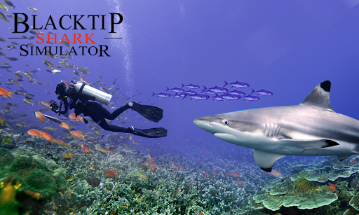 Blacktip Shark Simulator
