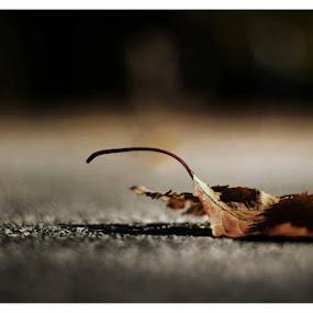by Manash Kaushik - Nature Up Close Leaves & Grasses (  )