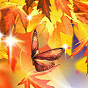 Fall Wallpapers HD Backgrounds