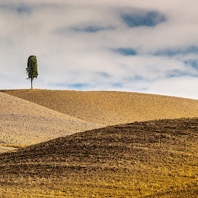 Curves the plowed fields by Miroslav Havelka - Landscapes Prairies, Meadows & Fields ( tuscany, autumn, colors, landscape, curves, fields )