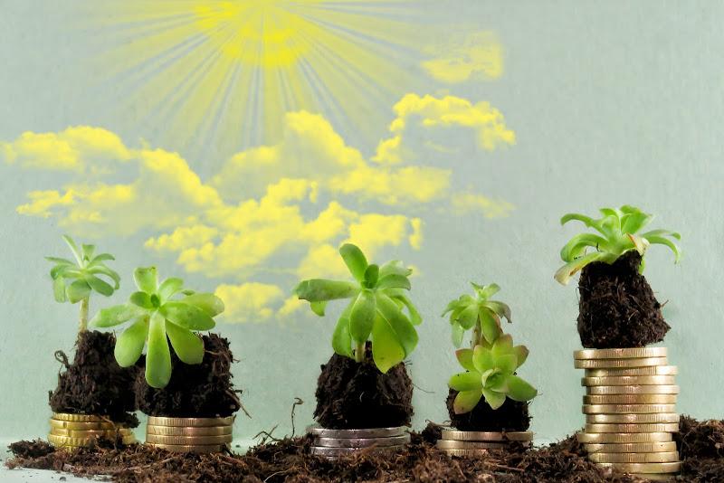 Green economy di Yoyo