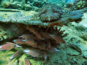 Photo: Crocodile fish and friends