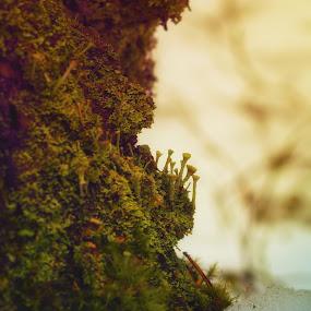 Shift by Juliusz Wilczynski - Nature Up Close Other plants