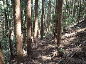 このまま林道へ