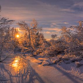 Winterlight by Rune Askeland - Landscapes Sunsets & Sunrises ( winter, snow, kvamskogen, frost, trees, sun, norway,  )