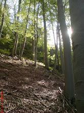 Photo: Las bukowy, jakich wiele w okolicy Kotła...