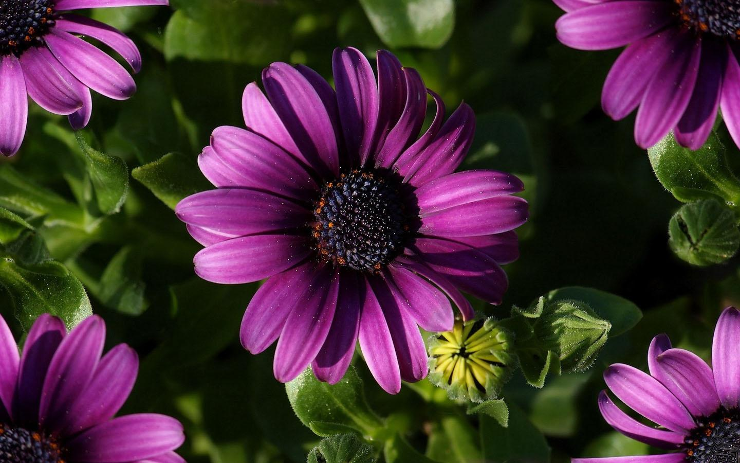 purple flower wallpaper  android apps on google play, Beautiful flower