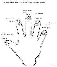 Photo: cuerpo humano dedos de la mano