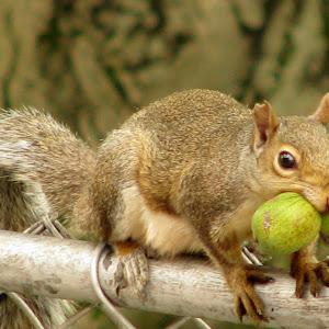 busy squirrel.jpg