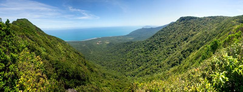 Mount Sorrow Ridge - Cape Tribulation, Qld