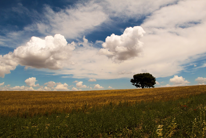 Giugno in Puglia di gabriellarusso09