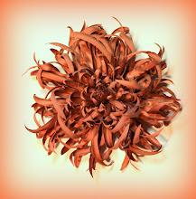 Photo: Крупная хризантема для Елены - спецзаказ 22.12.2013
