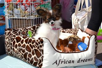 Photo: Zoey käis Tallinnas shoppamas Võitja näitusel 4 juuni, 2011
