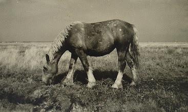 Photo: Mit 12 Jahren auf Hallig Hooge im August1954. Mit Agfa Box fotografiert.