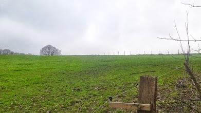 Photo: Blick zum Wanderweg ,-' und ,A7' östlich von Café Halle. Auf Höhe der Baumgruppe links im Bild befindet sich der Ruhrhöhenweg Süd (hier Straße ,Auf der Halle').
