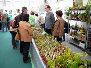 Photo: Special CP-exhibition at the Regio-Messe 2010. At the sales stand with plants from Germany's oldest CP-nursery Thomas Carow: Christian Carle (links) und Renate (Renné) Keller.