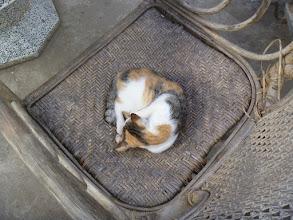 Photo: hostel cat