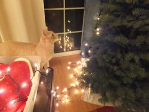 Photo: Helping Daddy string lights.
