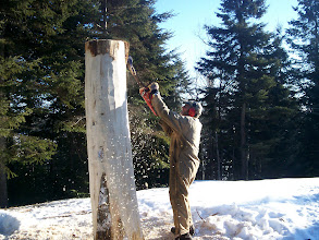 Photo: Starting the first Trout Totem pole 2012.