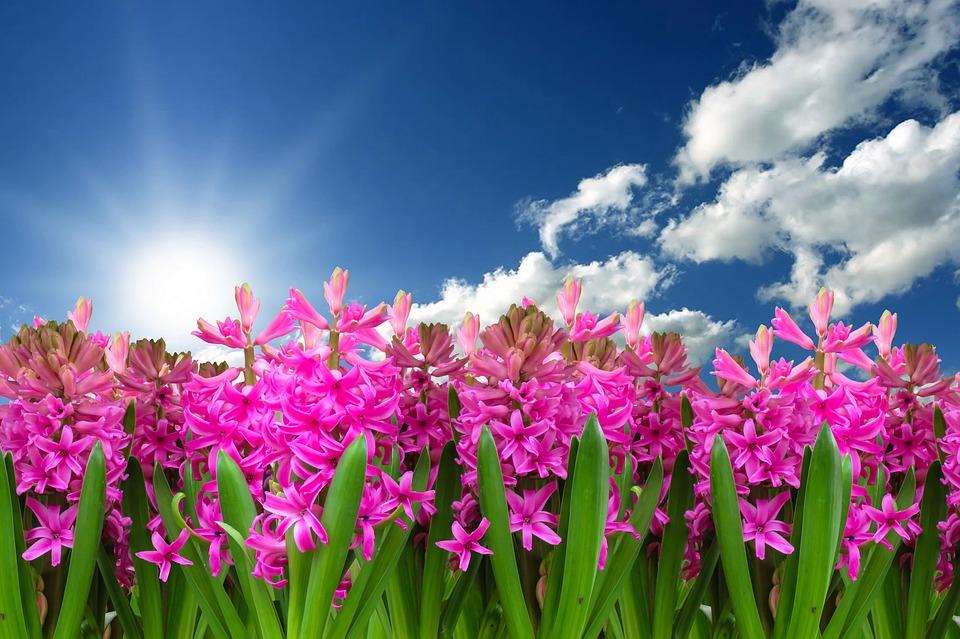 Top 10 flores típicas de la primavera