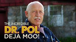The Incredible Dr. Pol: Deja MOO! thumbnail