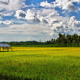 by Ryan Dominguez - Landscapes Prairies, Meadows & Fields ( rice fields, blue sky, panabo, greens, philippines )